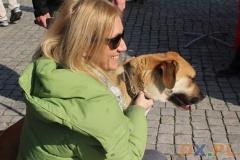Zdrowy pies - zdrowy człowiek