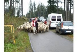 Dożynki i rozchód owiec na Stecówce