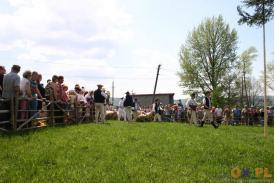 Miyszani owiec w Koniakowie