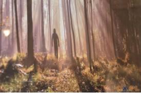 Arkana lasu w Sarkandrówce