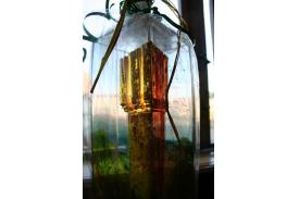 O Złotą Wieżę Piastowską