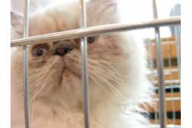 Wystawa kotów w Cieszynie