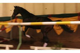 Koń pod choinkę