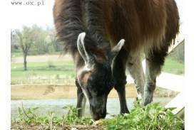 Mini zoo w Kończycach