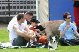 Psy brytyjskie i pasterskie w Chybiu