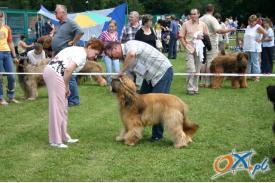 Wystawa psów rasowych