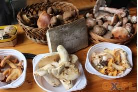 Piknik Ekologiczno-Leśny i Pectus
