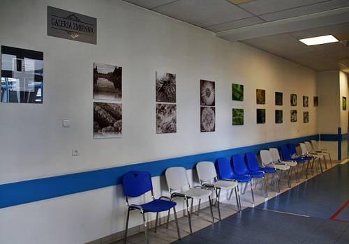 Podczas letnich miesięcy w Galerii Zmiennej Szpitala Śląskiego w Cieszynie można obejrzeć prace Barbary Karnas-Greń Fot: mat.pras.