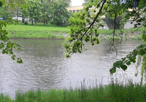 Olza Fot: JŚ