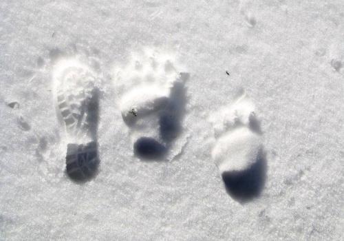 Ślady zwierząt, które porzuciły zimową drzemkę i dostosowują się do nowych, cieplejszych warunków przestają dziwić. fot. ARC OX.PL