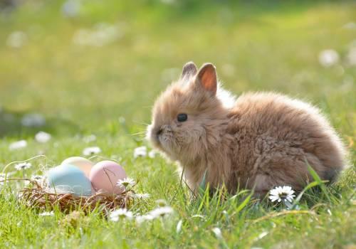 Wielkanocne życzenia od Was dla Was / fot. pixabay