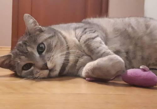 Właścicielka postrzelonej kotki Zuzi szuka sprawcy / fot. MG