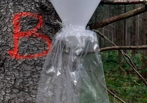 pułapka znajdująca się w lesie w Istebnej/ fot. JŚ