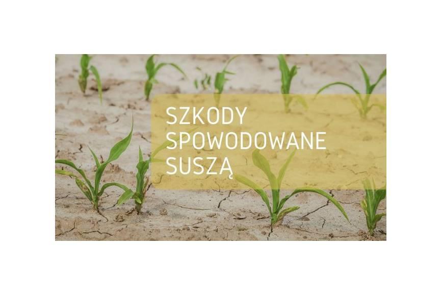 grafika udostępniona przez skoczowski urząd