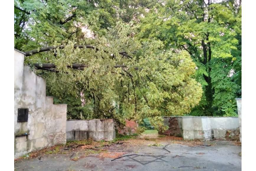 fot. SM Cieszyn